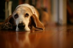 PhotoReflect - New South Photo - Molly Dog