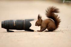 Take my picture! felix dobritoiu, animals, squirrels, animal photography, wildlife, funny photos, friend, parti, cameras