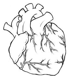 Human Heart Tattoo by  Anatomical Heart Outline Tattoo