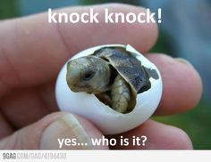 Just a baby turtle...