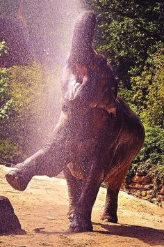 Happiest Baby Elephant ever