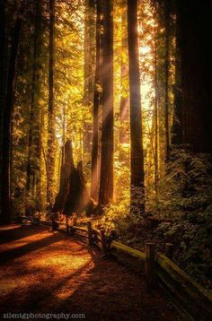 Redwoods California