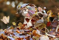 Lion Cub Loves Playing With Autumn Leaves