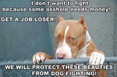 no to dogfighting!!!