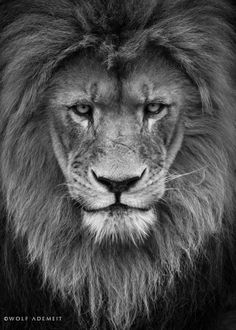 If you play a psychological war, you better kill the Leo first because they will never give up until they see you vanquished and all traces of you for ever lost in history. The sign of Leo was born to fight evil so if you tell them that's what you are then they will have all the reason they want to fight to full affect. A hungry lion is a bloody lion.