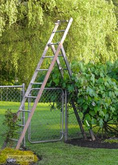 Make an old ladder garden arbour.. in minutes.  I'd cut the top bit off.