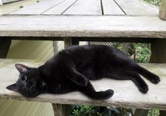 A Proper Bostonian: Postcards from Maine: Black is Beautiful I love black cats and this is why I do this. I am not going to stop. Theincensewoman