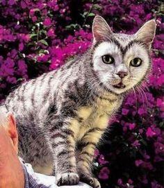 owl or cat
