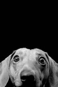 #bw #hound #dog #Sewcratic