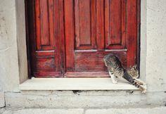 Cat stretching in Croatia