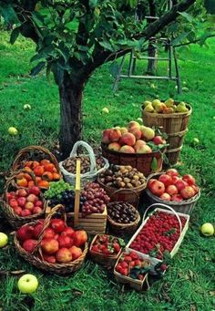so many different kinds of apples: you have to go to an orchard for so many, or have an orchard yourself!