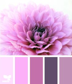 petaled purple