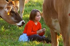 """While filming our very first TV commercial our actress (a real Organic Valley farmer) relaxes """"on-set"""" for a moment with the cows. It's easy to feel at home with the cows when you're an OV farmer!"""