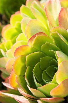 pretty succulent