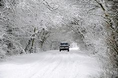 Despite winter weather conditions, you can still help prevent damage to your trees. #TreePhotos #Winter