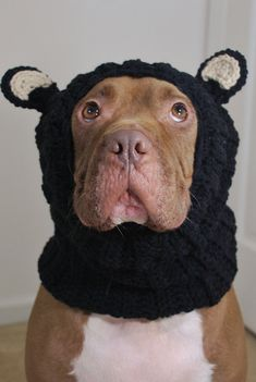Black Bear Dog Snood Made to Order by courtanai