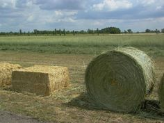 Producing bales with extremely low cost from this perennial hardy grass has been demonstrated with large viability in several countries.