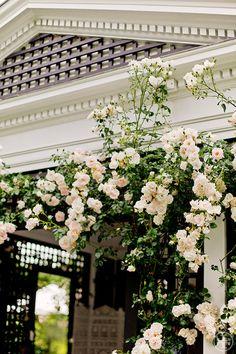 Roses, Tory Burch's garden