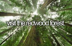 visit the redwood forest