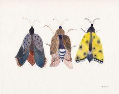 Three moths