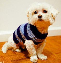 easi dog, craft, dogs, knitting patterns, pet, sweater knit, dog sweaters, crochet pattern, knit pattern