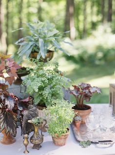 Potted plants at this Family Farm Wedding in Vermont