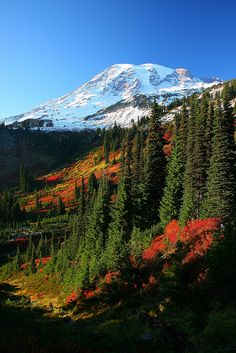 Mt Rainier fall color. Mount Rainier is a massive stratovolcano located 54 miles southeast of Seattle in the state of Washington.