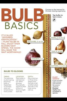 Plant your bulbs in the fall to enjoy the show in the spring.