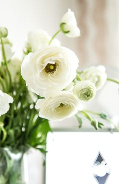 Ranunculus for today) #ranunculus, #flowers, #office, #home, #rie