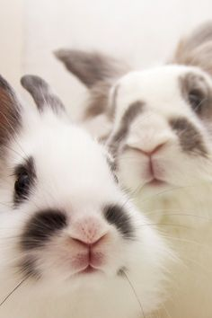 Bunnies have the cutest little noses!