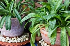 5 Tips for Healthier Housplants | Stretcher.com - Help your houseplants to be healthy and vibrant