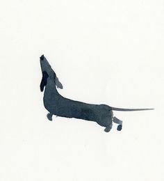 Inky dachshund