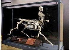 Giant human skeleton real