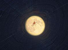 A busy hermit spider spinning its web at dusk, pictured on September 7, 2014. This is a composite of two images, one focused on the spider and the other on the Moon. Credit and copyright: Brian who is called Brian on Flickr.