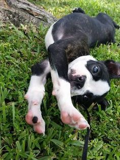 Stretch.......flop!