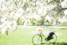 Spring theme ideas
