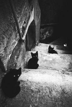 stair, anim, black cats, dark, kittens, basement cat, kitti, kitty, photographi