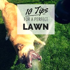 10 Tips for a Perfect #Lawn