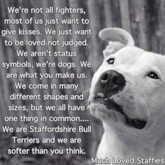 Pitbulls Lovers's photo: much loved Staffies