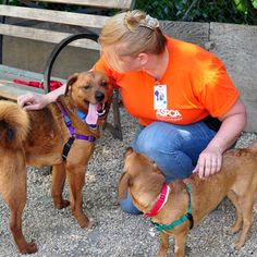 What It Takes to Be a Volunteer at a Dog Shelter   Dogster
