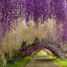 Los jardines mas hermosos del mundo arte en jardiner a for Fotos de jardines bonitos