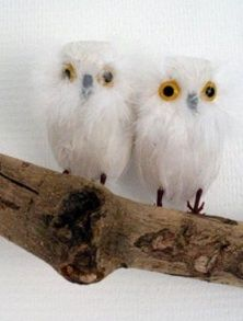 owlies on a branch