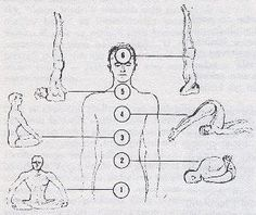 The seven basic asanas (postures) associated with seven chakras according to Dr. Vigh