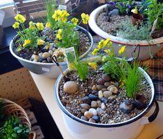 Miniature Gardening-Create Your Own Tiny World-birdsandbloomsblog.com