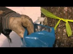 How to make Maple Syrup in the Upper Peninsula of Michigan- this one's for Jer