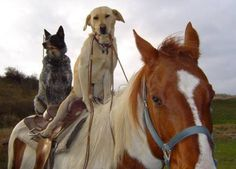 Just two dogs riding a horse, nothing unusual.