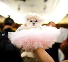 tutu kitty!