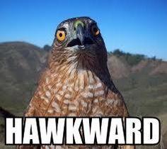 oh... hawkard!