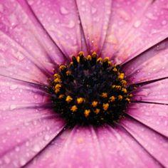 Photographing Flowers | Close-up Photography Tips. http://www.exposureguide.com/photographing-flowers.htm