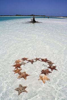 Star Fish.
